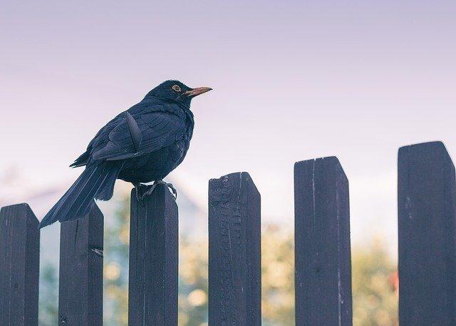 bird-3180681_640